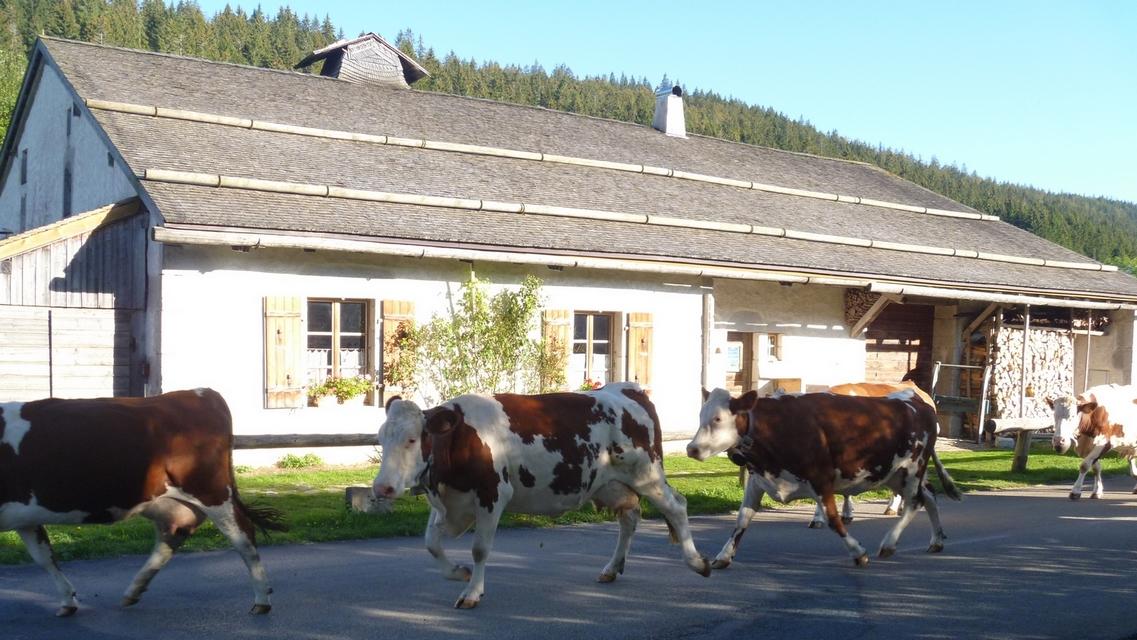 Ecomusée Michaud et ses voisines